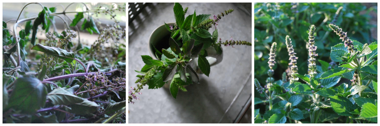 Indie Herbalist